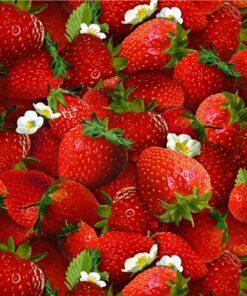 7251 Jordbær